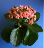 Продам неприхотливые комнатные растения из дома