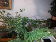 Растение для дома и офиса